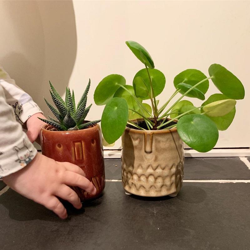 Cách trồng và chăm sóc cỏ gương